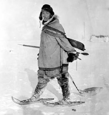 Eskimo hunter on snowshoes dragging seal circa 1908-1915