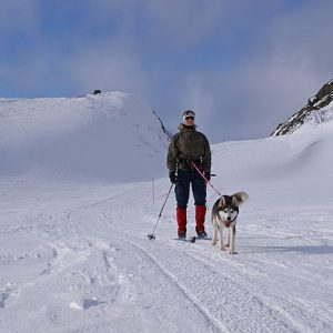 Woman on cross-country skis pulled by a dog