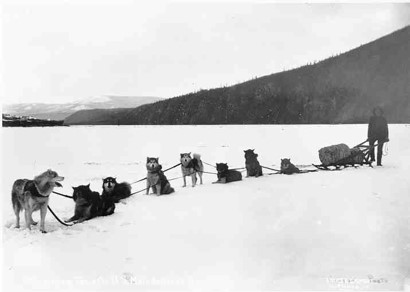 Ben Downing with 8 sled dogs and a sled full of mail on the frozen Yukon River