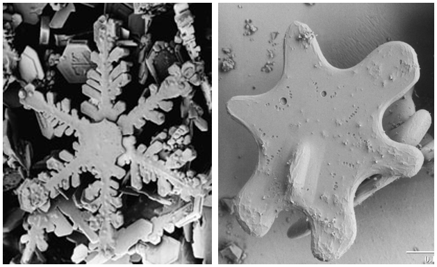 A scanning electron microscope image of a new snow crystal and an old snow crystal