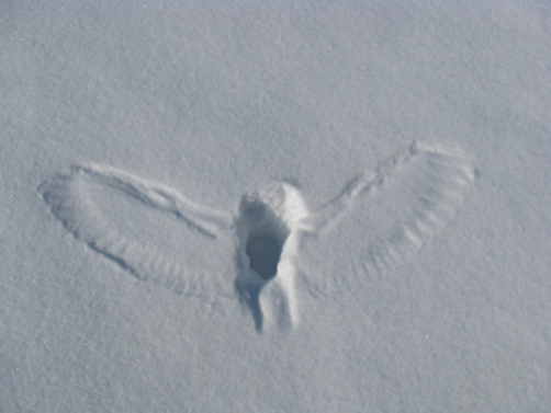 imprint of an owl in the snow