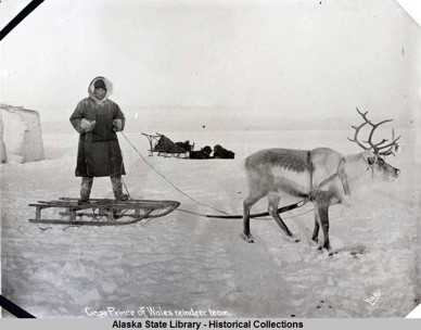 Man in parka standing on small wooden sled hitched to one reindeer.
