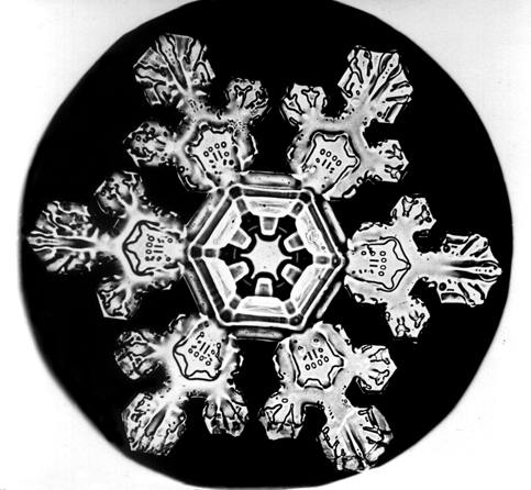 close up of a snowflake (white) on a black background