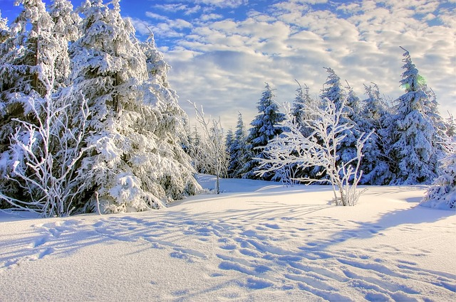 Sunny day in snow-covered forest clearing, snow on trees and ground