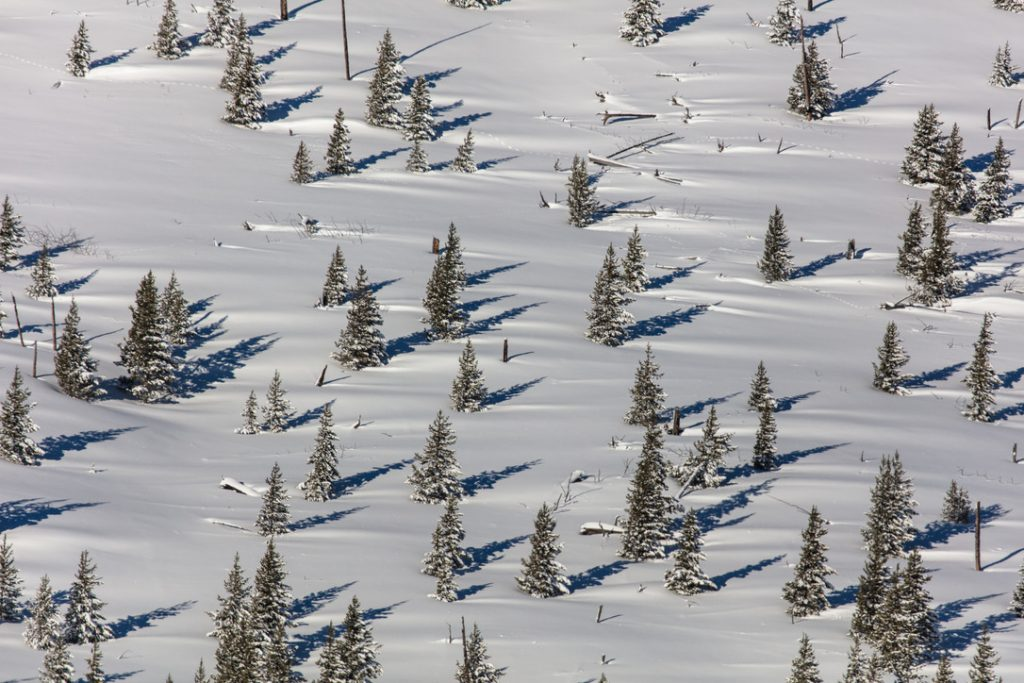 aerial view of conifer trees with linear snow drifts on the downward side