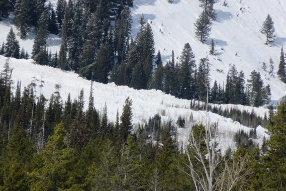 mountain slope with trees and avalanche debris