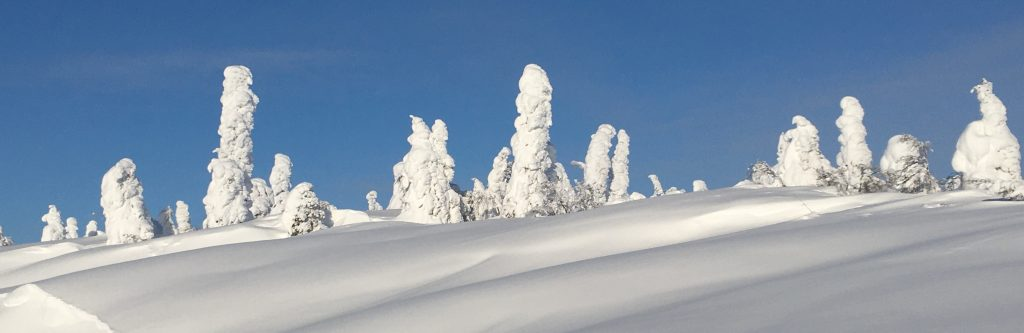 Snow-covered trees and ground against blue sky